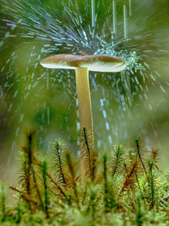蘑菇才是主角 狂热蘑菇粉的摄影图集